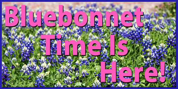 Bluebonnet Time Is Here!